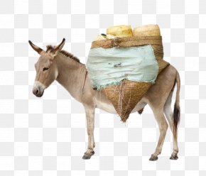 Donkey Laden With Goods - Mule Donkey Stock Photography Horses Royalty-free PNG