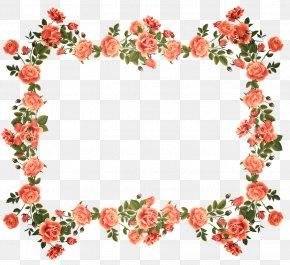Rose - Borders And Frames Picture Frames Rose Flower Floral Design PNG