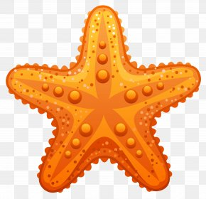 Transparent Starfish Clipart Image - Starfish Clip Art PNG