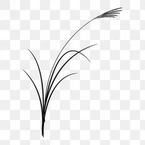 Twig Grasses Plant Stem Leaf Desktop Wallpaper PNG