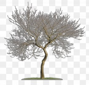 Tree - Tree Woody Plant Branch Twig PNG