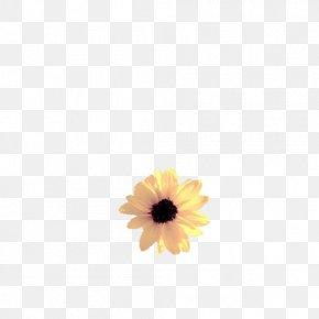 Pastel Flower - Common Sunflower Artificial Flower Clip Art PNG