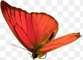 Butterfly,insect,specimen - Butterfly Insect Animation PNG