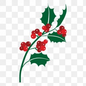 Mistletoe - Mistletoe Phoradendron Tomentosum Christmas PNG