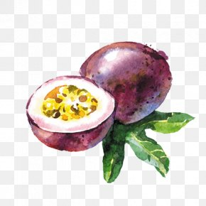 Passion Fruit - Vector Graphics Watercolor Painting Stock Photography Drawing Illustration PNG