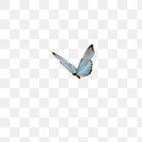 Butterfly,insect,specimen - Papillon Dog Butterfly Insect High-definition Television Wallpaper PNG
