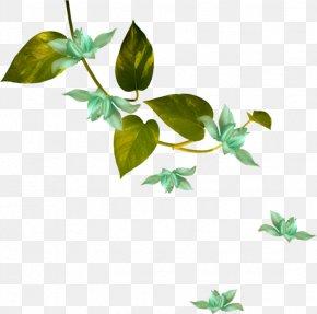 Hari Raya Background Flower Green Leaf - Green White Flower Image PNG
