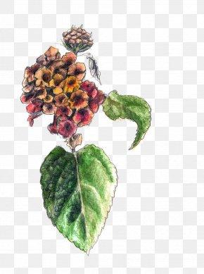 Watercolor Cactus Collection - Art Flower Lantana Camara Sketch PNG
