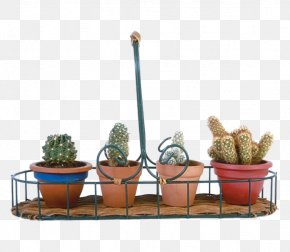 All Kinds Of Potted Cactus - Cactaceae Flowerpot Bonsai PNG
