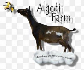 Goat Farm - Nigerian Dwarf Goat Farm Cattle Dairy Mammal PNG