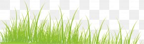 Grass - Vetiver Commodity Green Wheatgrass Wallpaper PNG