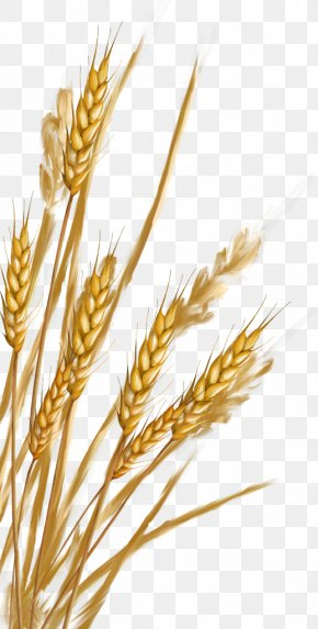 Wheat - Emmer Spelt Rye Cereal Germ Whole Grain PNG