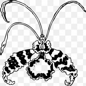 Flower - Flower Encyclia Cattleya Orchids Clip Art PNG