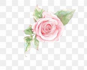 Pink Rose Flower - Rosa Chinensis Beach Rose U82b1u89e3u8a9e PNG