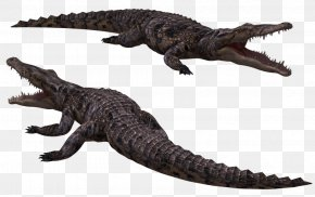 Crocodile Image - Crocodiles Nile Crocodile Saltwater Crocodile American Alligator PNG