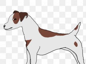 Puppy - Dog Breed Jack Russell Terrier Italian Greyhound Puppy PNG