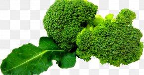 Broccoli - Broccoli Slaw Leaf Vegetable Clip Art PNG