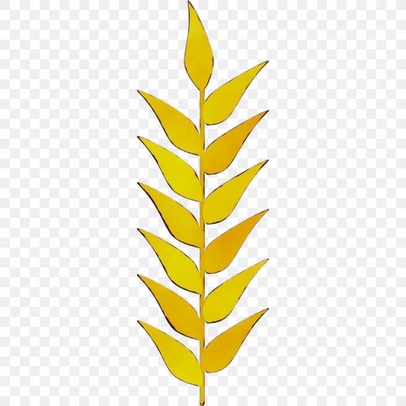 Leaf Plant Stem Commodity Line Font, PNG, 1107x1107px, Leaf, Botany, Branching, Commodity, Fern Download Free