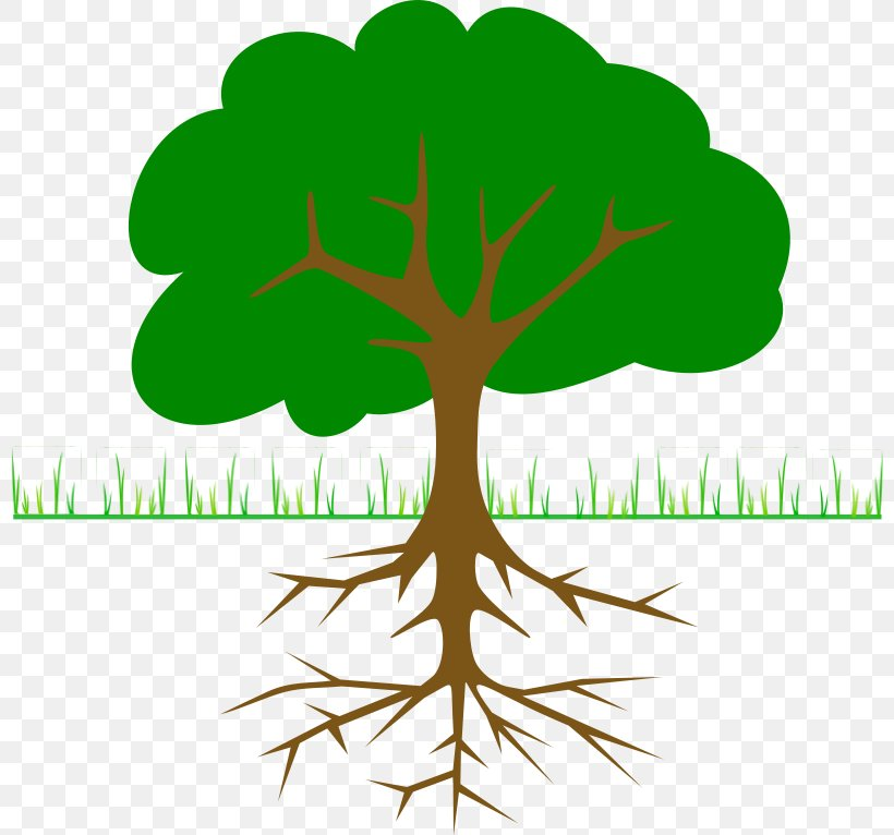 The Great Kapok Tree Clip Art Png 800x766px Great Kapok Tree Branch Christmas Tree Diagram Flower Choose from 20+ tree diagram graphic resources and download in the form of png, eps, ai or psd. the great kapok tree clip art png