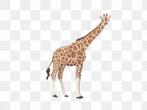 Giraffe Cartoon Vector Material - Giraffe Cartoon PNG