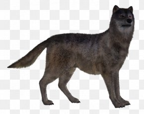 Dog - Dog Red Fox Canidae PNG