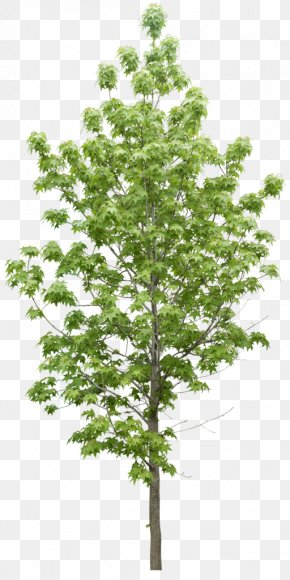 Trees - Tree Plant Data Icon PNG