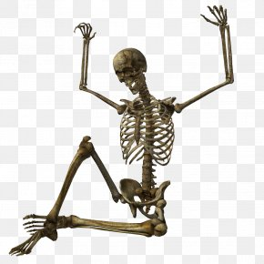 Skeleton Image - EverQuest II Habitica Wikia PNG
