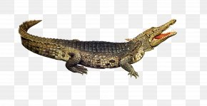 Crocodile Pictures - Nile Crocodile American Alligator PNG