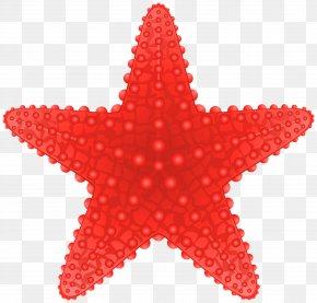 Starfish Transparent Clip Art Image - Starfish Clip Art PNG