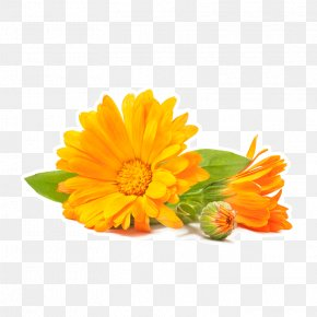 Marigold - Lotion Lip Balm Cream Herb Essential Oil PNG