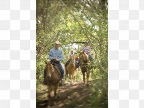 Hotel - Cedar Creek, Texas Hyatt Regency Lost Pines Resort And Spa Hotel PNG