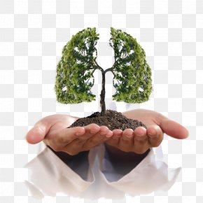 Creative Lungs - Lung Cancer Smoking Symptom PNG