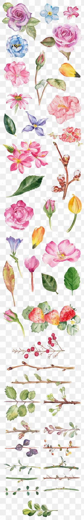 Rose Watercolor - Watercolor Painting Flower Drawing Illustration PNG