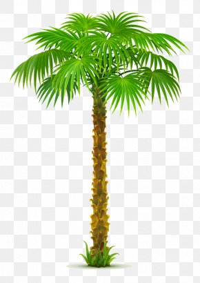 Summer Berries Trees - Clip Art Palm Trees Vector Graphics Illustration PNG
