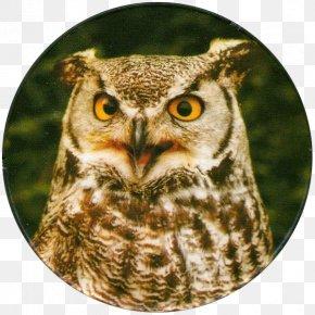 Great Horned Owl - Great Horned Owl Bird Of Prey Barn Owl PNG