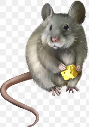 Vector Cartoon Mouse - Rat Mouse Rodent Clip Art PNG