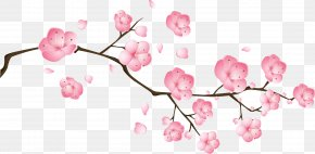 Vector Pink Peach Flowers - Blossom Pink Drawing PNG