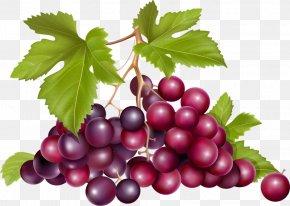 A Bunch Of Grapes - Grape Raceme Euclidean Vector Fruit PNG