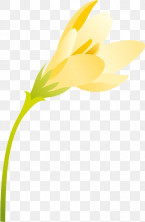 Spring Flowers - Flower Petal Plant Stem Yellow PNG