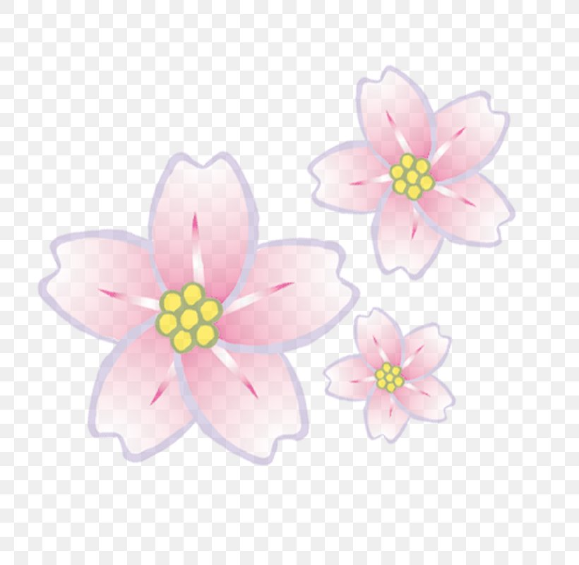 Woman Flower Petal, PNG, 800x800px, Woman, Blossom, Cherry Blossom, Flower, Flowering Plant Download Free