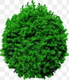 Fir-tree Image - Tree Clip Art PNG