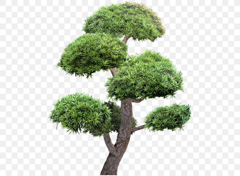 Tree Garden Landscape Clip Art, PNG, 504x600px, Tree, Bonsai, Coreldraw, Digital Image, Evergreen Download Free