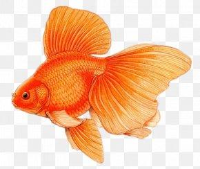 Fish - Fantail Black Telescope Common Goldfish Comet PNG