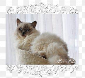 Balinese Cat Siamese Cat Ragdoll Birman Burmese Cat Png