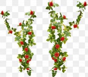 Rose Rattan - Beach Rose Gratis Clip Art PNG