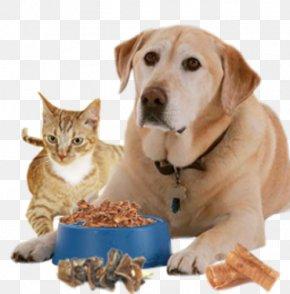 Dog Food - Dog Pet Sitting Cat Food Puppy PNG