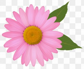 Pink Daisy Clipart Image - Common Daisy Clip Art PNG