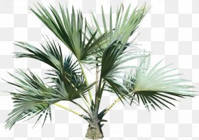 Palm Tree - Palm Trees Clip Art PNG