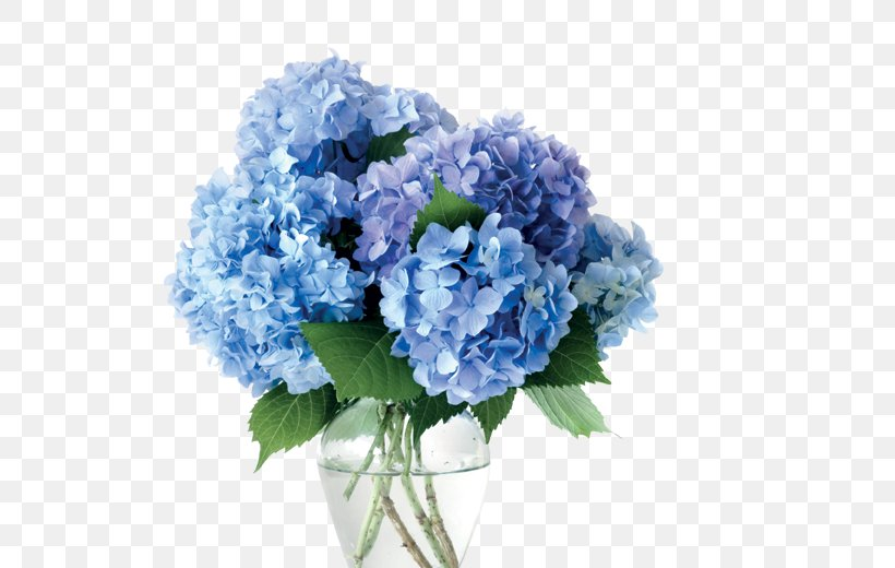 Vase Cut Flowers Hydrangea Blue, PNG, 520x520px, Vase, Annual Plant, Artificial Flower, Baby Blue, Blue Download Free