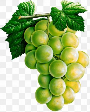 Grape Image - White Wine Common Grape Vine Juice PNG